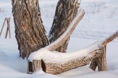 Abedules en la nieve en invierno Árboles bajo capa grande de nieve en invierno Imagen de archivo
