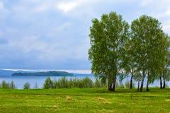 Abedules en la orilla del río Fotos de archivo