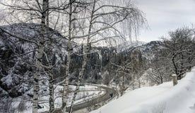 Abedules en las montañas Foto de archivo