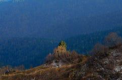 Abedules en muchas altitudes Bosque abajo Fotografía de archivo