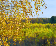 Abedules en otoño Fotografía de archivo