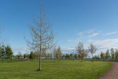 Abedules en parque de la primavera Fotografía de archivo libre de regalías