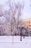 Abedules helados en parque de la ciudad Fotografía de archivo libre de regalías