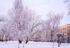 Abedules helados en parque de la ciudad Foto de archivo