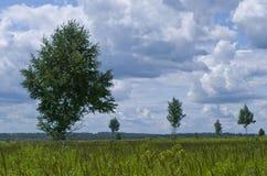 Abedules jovenes - paisaje Imágenes de archivo libres de regalías