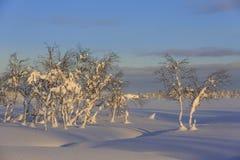 Abedules nevados Fotos de archivo
