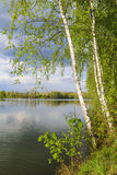 Abedules por el lago Fotografía de archivo