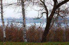 Abedules por el lago en otoño Fotografía de archivo libre de regalías