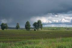 Abedules solos en campos agrícolas debajo de un cielo lluvioso Fotografía de archivo libre de regalías