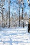 abedules y árboles de alerce nevados en bosque Imagen de archivo