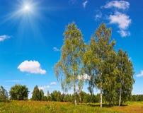 Abedules y cielo de la sol Imagen de archivo