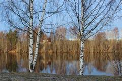 Abedules y espejo del agua Foto de archivo libre de regalías