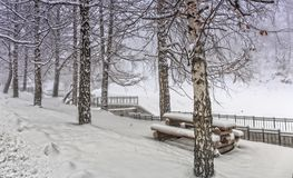 Abedules y nieve Foto de archivo