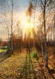 Abedules y otoño Foto de archivo