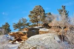 Abedules y pinos que crecen en rocas en invierno Imágenes de archivo libres de regalías