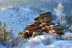 Abedules y pinos que crecen en rocas en invierno Imagen de archivo