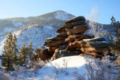 Abedules y pinos que crecen en rocas en invierno Foto de archivo
