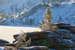 Abedules y pinos que crecen en rocas en invierno Imagen de archivo libre de regalías