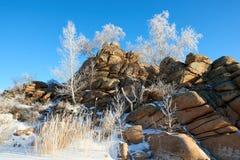 Abedules y pinos que crecen en rocas en invierno Fotografía de archivo libre de regalías