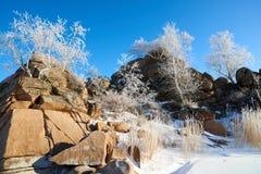 Abedules y pinos que crecen en rocas en invierno Fotos de archivo libres de regalías