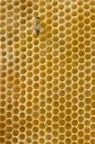 abeille à miel de peigne Images libres de droits