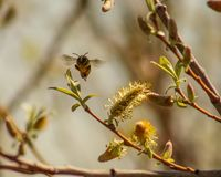 abeille 2018 images stock