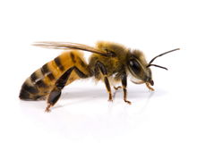 abeille Photographie stock