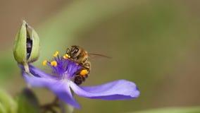 Abeille avec la fleur bleue Images stock