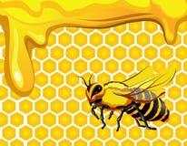 Abeille avec le nid d'abeilles et le miel Image libre de droits