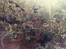 Abeille dans Sun Ray Images libres de droits