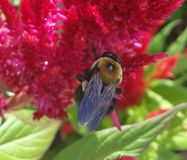 abeille de fleur Photographie stock