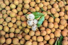 Abeille de longan de Dimocarpus Photos libres de droits