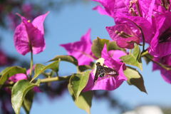 Abeille de miel avec la fleur Images libres de droits