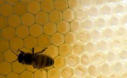Abeille de miel sur le peigne Photographie stock
