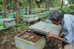 Abeille de nid d'abeilles Images stock