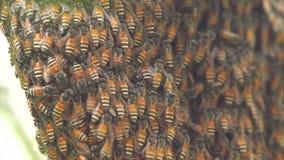 Abeille de nid d'abeilles banque de vidéos