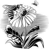 Abeille de travailleur sur une fleur illustration stock
