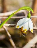 Abeille en fleur Image stock