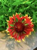 Abeille en fleur Image libre de droits