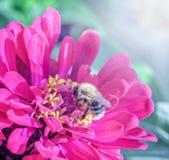 Abeille en fleur rose images stock