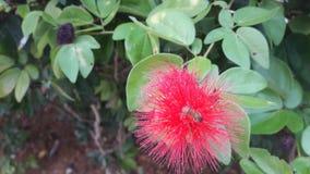 Abeille et fleur Photo stock