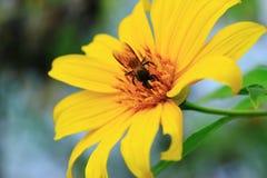 Abeille et fleur Photographie stock