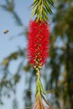 Abeille et fleur Photo libre de droits