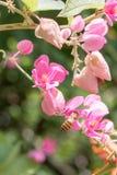 Abeille et fleurs photo stock