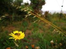 Abeille et flowersII Photo libre de droits