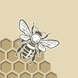 Abeille et miel Images libres de droits