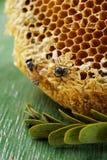 Abeille et nid d'abeilles sur le fond Images stock