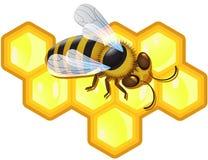 Abeille et nids d'abeilles Images stock