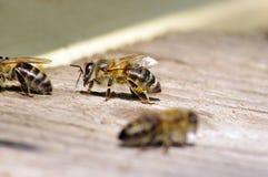 Abeille fonctionnante près de ruche Photos libres de droits