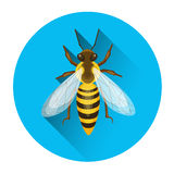 Abeille Honey Insect Apiary Icon Image libre de droits